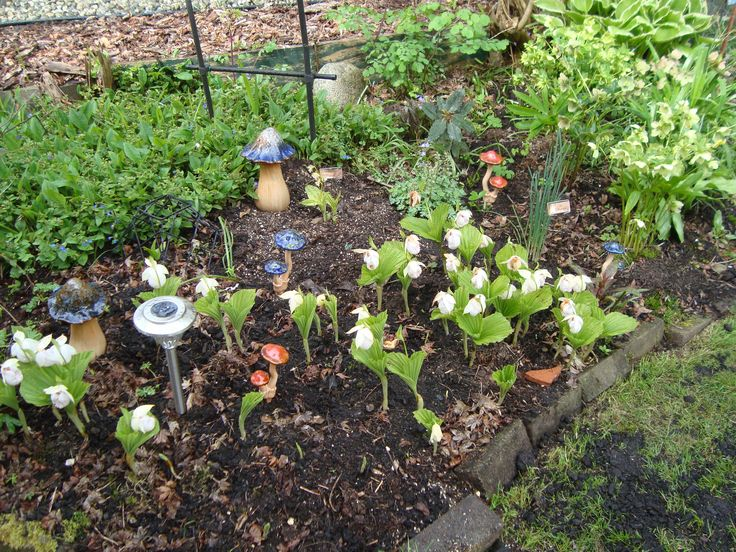 Cypripediums a month early 2015