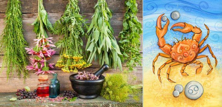 byliny bylinky a znameni horoskopu rak 22 6 22 7