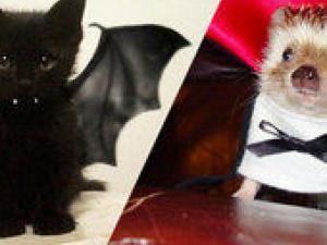 25 costumes d'halloween super mignons qui transformeront vos animaux de compagnie en petits... • Hellocoton.fr