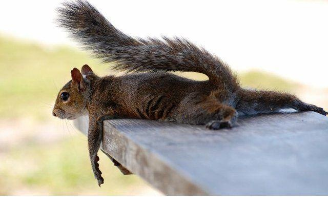Funny Animal Pictures, Birds Feeders, Animal Humor, Funny Pictures, Tires, Funny Squirrels, Funny Wallpapers, Funny Animal Photos, Relaxing