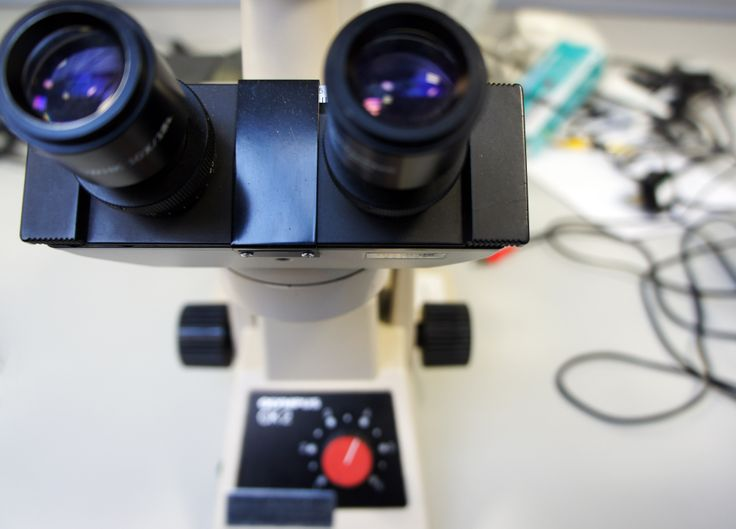 A microscope in the teaching lab, looking particularly happy during BCI STARS 2014. Photo by Dr Marianne Baker.