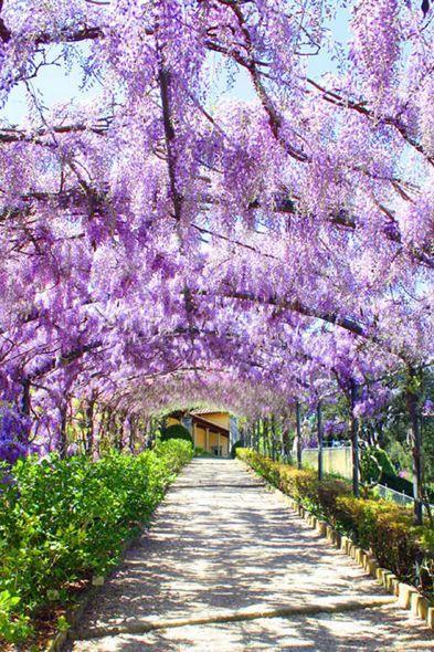 Glicine Giardino Bardini Firenze #TuscanyAgriturismoGiratola
