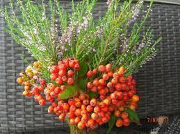høstblomster