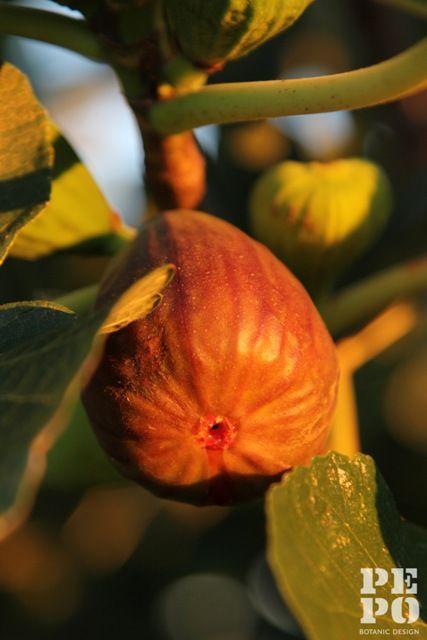 Australian country kitchen garden design  Orange, Central West New South Wales By Pepo Botanic Design