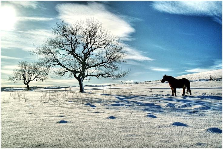 celestial pasture