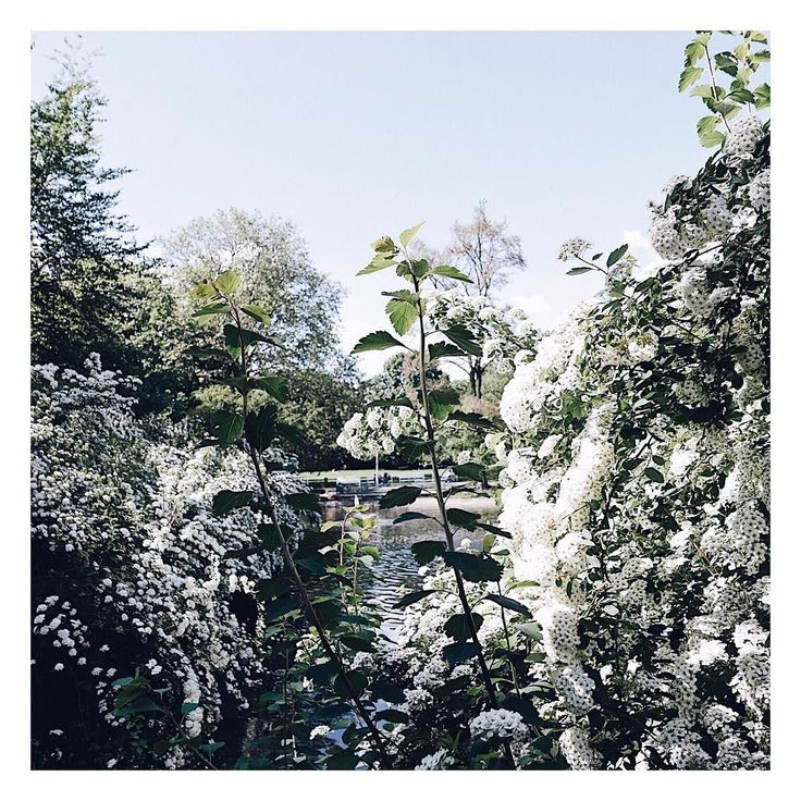 Park Wilsona taki piękny  _______ #igerspoznan #photowalkbcp #bcppoznan #bcppoznan2017 #poznan #poznań #poznancity #poznangram #park #parkwilsona #flowers #nature #naturelovers #naturephotography #bloom #blooming #tv_flowers