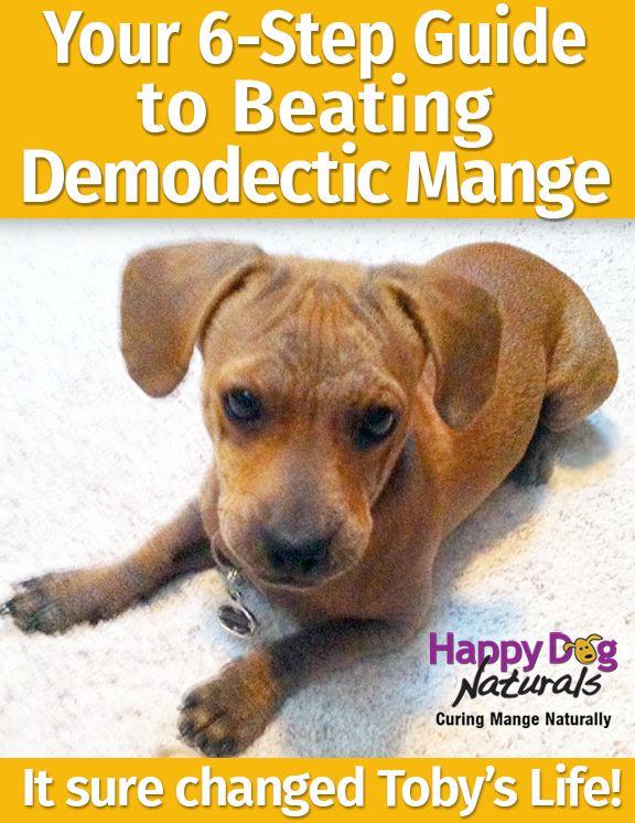 Canine mange treatment