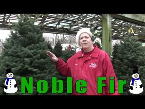 Looking for a Tree? Randy Best Gives You What Fir!