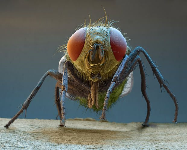 90 Best Electron Microscope Images Insects Amp Bugs Images