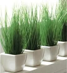 16 best Plant deco images on Pinterest   Gardening, Plants and Gardens
