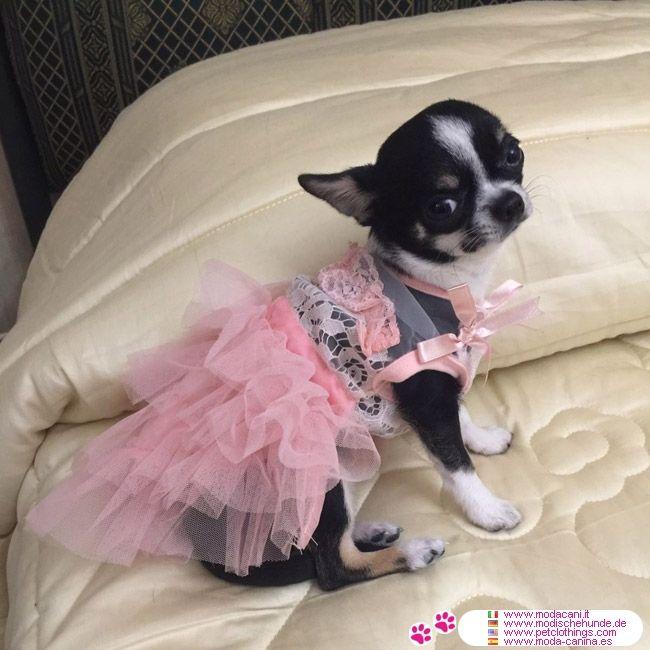 Robe Rose de Mariage pour Petits Chiens et Chihuahua #VetementChiens #Chihuahua - Robe de mariage pour les petits chiens et chihuahua, veraiment chic, avec de la dentelle sur le corsage et jupe en tulle à volants
