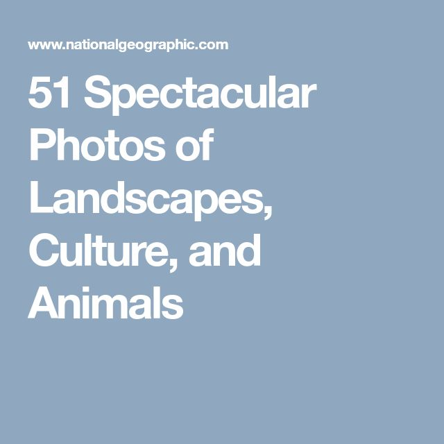 51 Spectacular Photos of Landscapes, Culture, and Animals