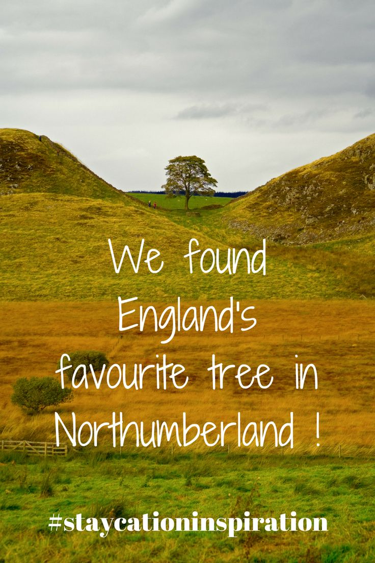 Staycation inspiration for Northumberland. Lots of ideas for family days out with kids. Hadrian's Wall, England's favourite tree (aka Robin Hood Tree / Sycamore Gap Tree), Farne Islands, Alnwick Gardens, St. Mary's Lighthouse, Holy Island / Lindisfarne. Lots of staycation inspiration. Travel inspiration.