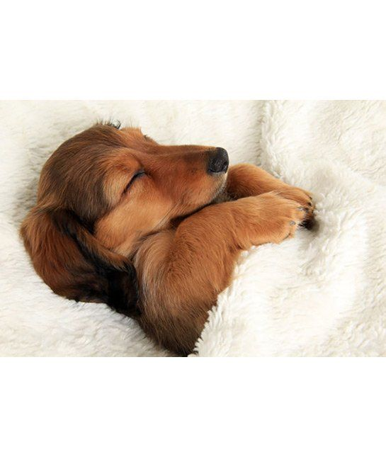 http://mom.me/mind-body/20513-dogs-need-sleep-your-bed/item/dreaming-dachshund/