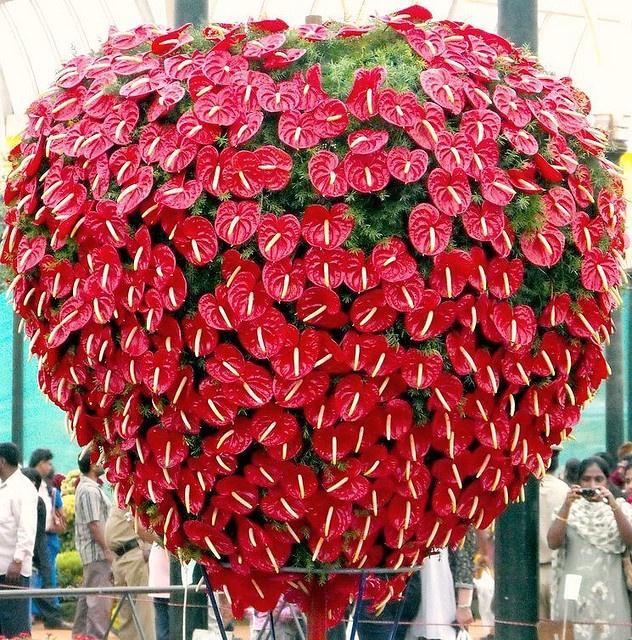 antherium strawberry hanging basket