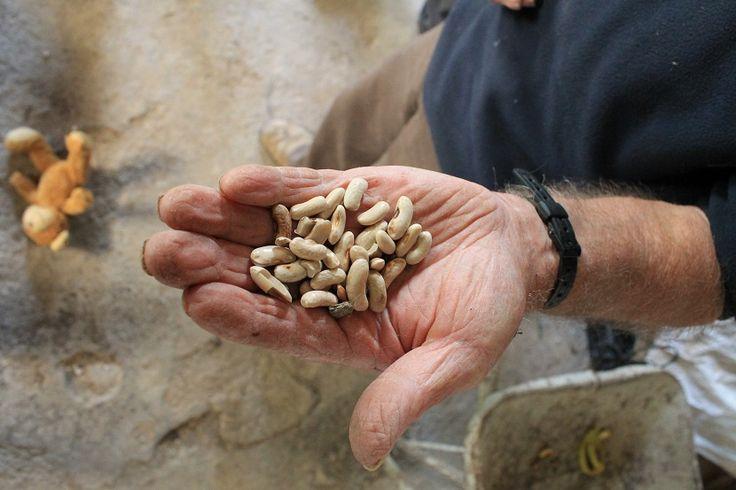 Diferencias entre semillas ecológicas tratadas y no tratadas - http://www.jardineriaon.com/diferencias-semillas-ecologicas-tratadas-no-tratadas.html #plantas