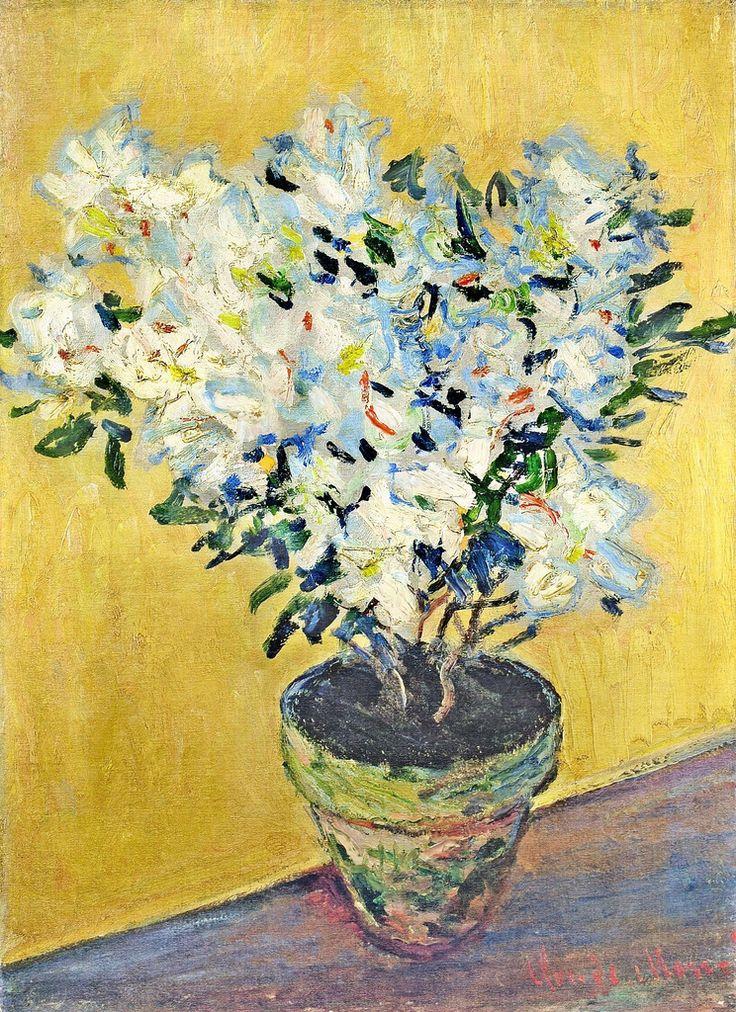 1882-85 Claude Monet Pot of white azaleas(private collection)(50,5 x 37 cm)