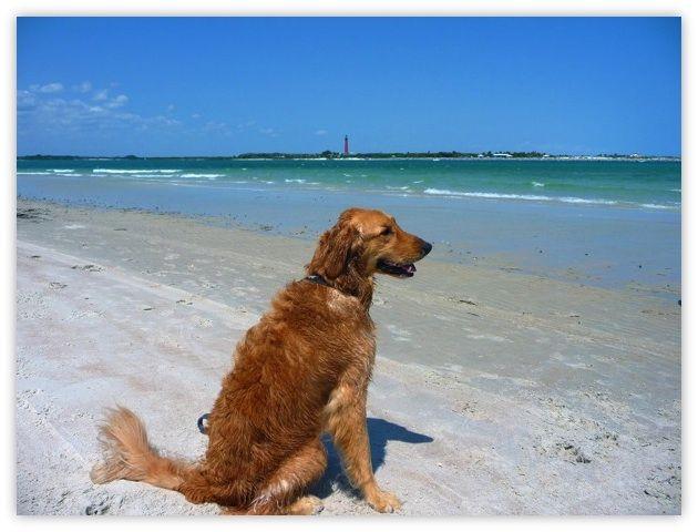Dog Friendly Beaches Flagler Beach Fl