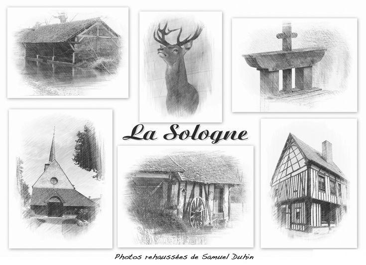 Samuel Duhin expose sa Sologne à Ciran - Le JardinOscope, toute la flore et la faune de nos parcs et jardins