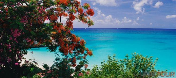 TRINIDAD ET TOBAGO : Le climat tropical et la géographie de Trinité-et-Tobago ont donné naissance à un véritable paradis pour les animaux et les plantes exotiques, présents en nombre impressionnant sur les deux îles. La forêt primaire, zone protégée, et les récifs coralliens de Tobago font partie des lieux les plus beaux pour observer des espèces diversifiées de mammifères, oiseaux, reptiles, poissons et coraux, de mousses, plantes et arbres tropicaux.