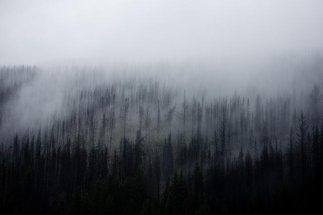 Misty foggy