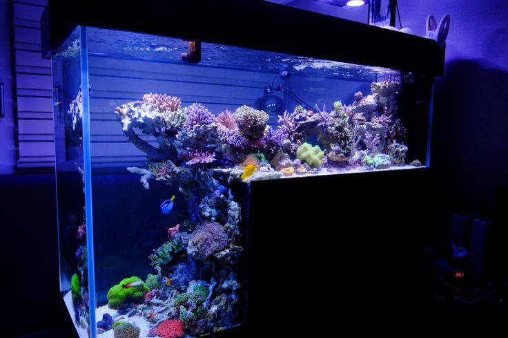 1000 images about aquariums and natural habitats on for Natural fish tank
