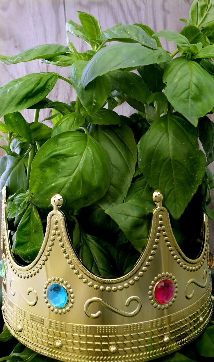 Is basil overflowing in your garden? Try something other than pesto!