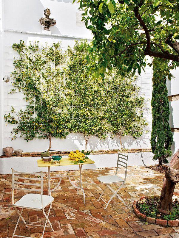 небольшой сад с лимонником
