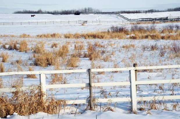 Long-term plans underway for major southeast Edmonton development - Edmonton developers are working on a proposal that will eventually see 68,000 people living on what's now mainly farmland south of Mill Woods.