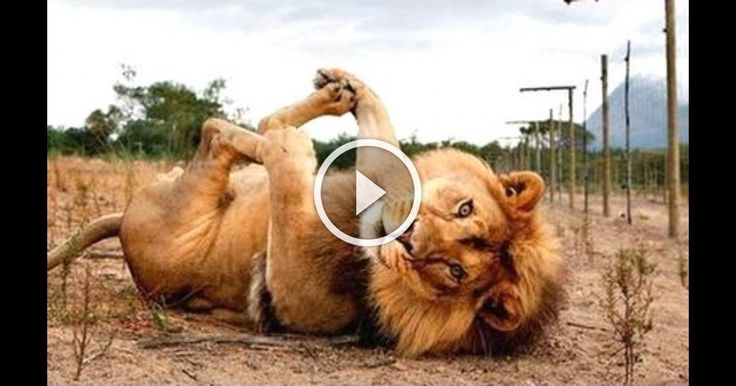 Funny Animals - A Funny Animal Videos Compilation 2015