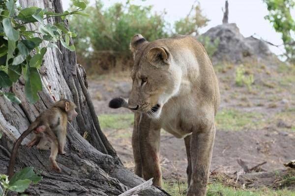 africa kenia