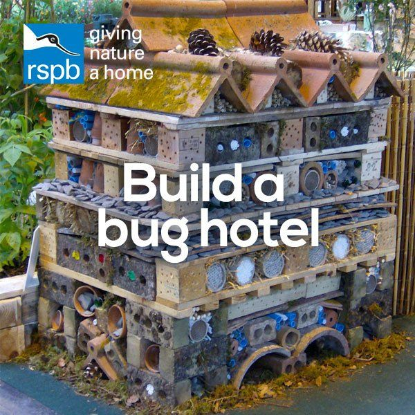 Our project of the week: Build a bug hotel!