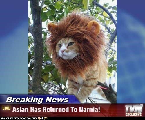 Cute Dog Memes Wallpaper Narnia Memes English Breaking News Aslan Has Returned