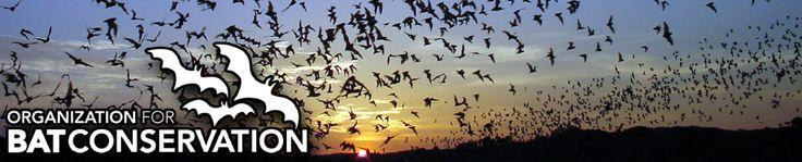 Build Your Own Bat House