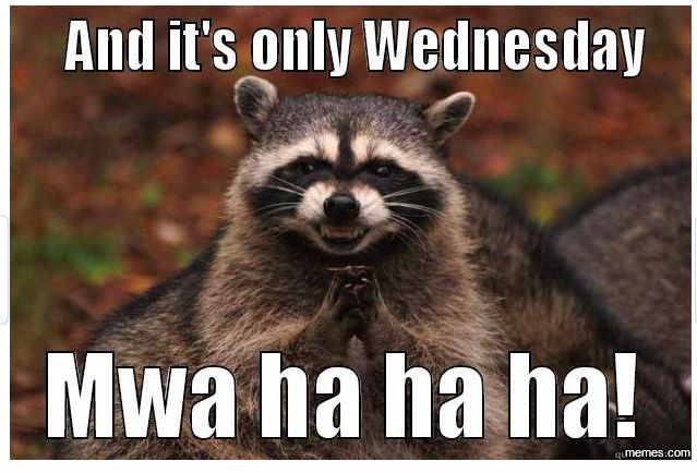 17 Best Images About Funny Lol On Pinterest: 17 Best Ideas About Wednesday Memes On Pinterest