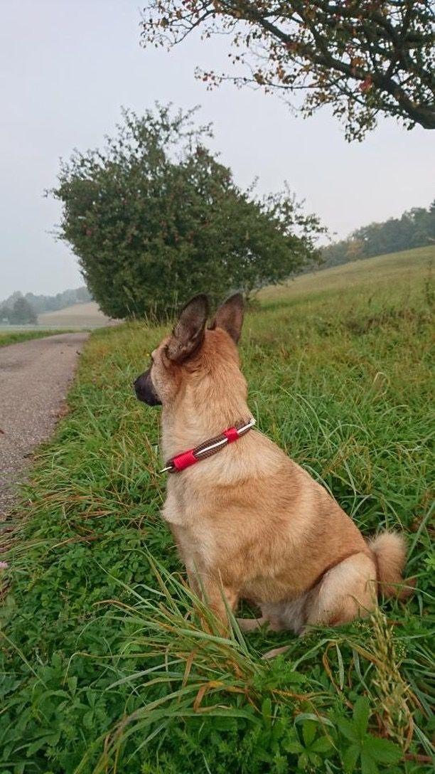 UDog Halsbänder und Leinen aus strapazierfähigem Paracord für deinen Hund. Ob Husky, Bulldogge, Labrador oder Rottweiler, für jede Rasse ist etwas dabei! Für dich gibt es das passende Armband aus Paracord oder auch einen Schlüsselanhänger mit Namen! Gegen Zecken bietet UDog ebenfalls hochwertige Zeckenhalsbänder mit EM Ketamik! www.u-Dog.de