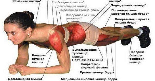 Упражнение #планка — универсальная тренировка для всего тела. Всего 2 минуты в день — и ты будешь в форме!
