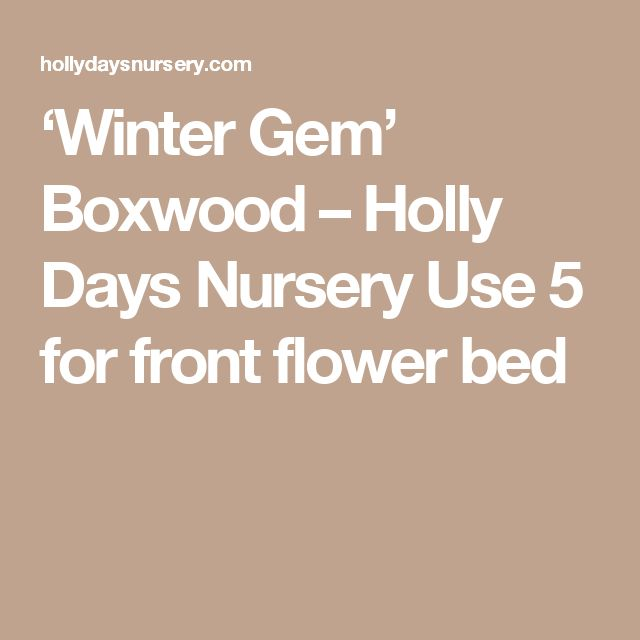 'Winter Gem' Boxwood – Holly Days Nursery Use 5 for front flower bed