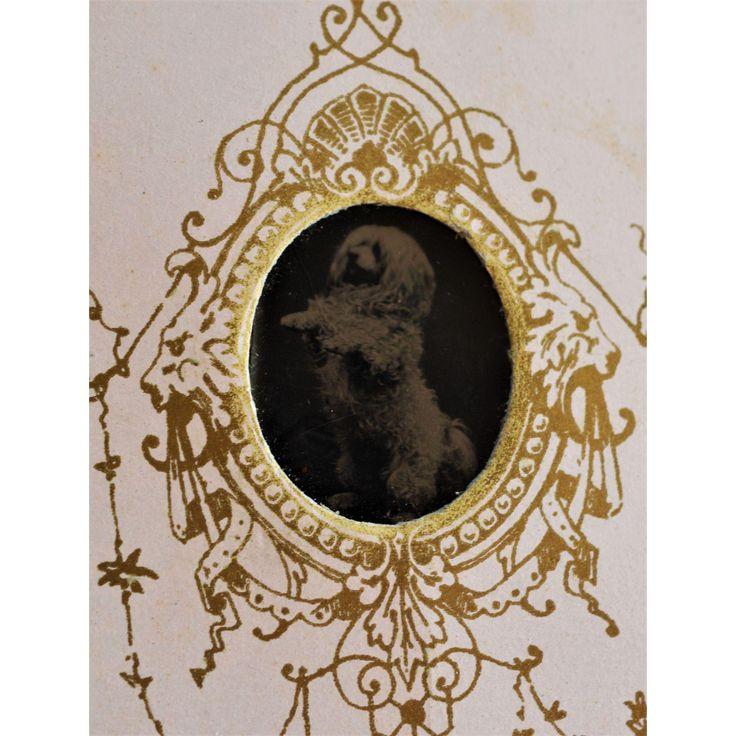 Antique French Gem Tintype Photo ~ Begging Dog