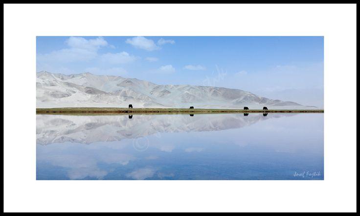 Fotoobraz - Jaci u jezera v horách u města Kašgar, Sin-ťiang, západní Čína. Foto: Josef Fojtík - www.fotoobrazarna.cz - https://www.facebook.com/Fotoobrazarna.cz