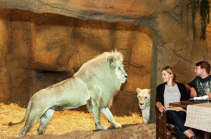 dining with the lions - jamala wildlife lodge Australia
