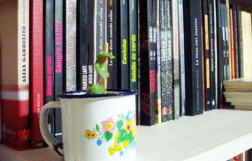 Por segundo año consecutivo, el Club de Lectura de LA VACA MARIPOSA, convoca a diversos escritores a recomendar libros para leer durante las vacaciones de verano. Novelas, poesías, ensayos... todo ...