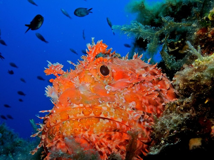 Diving in Mallorca - Rosa Taberner