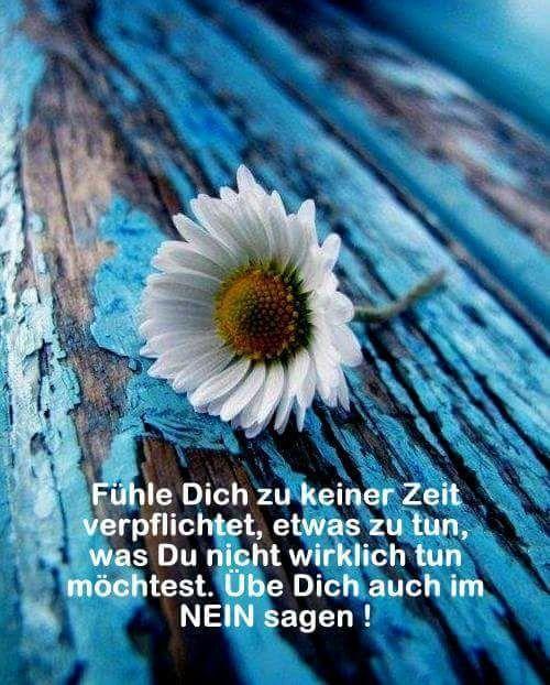 dreamies.de (1vkcrwnud0d.jpg)