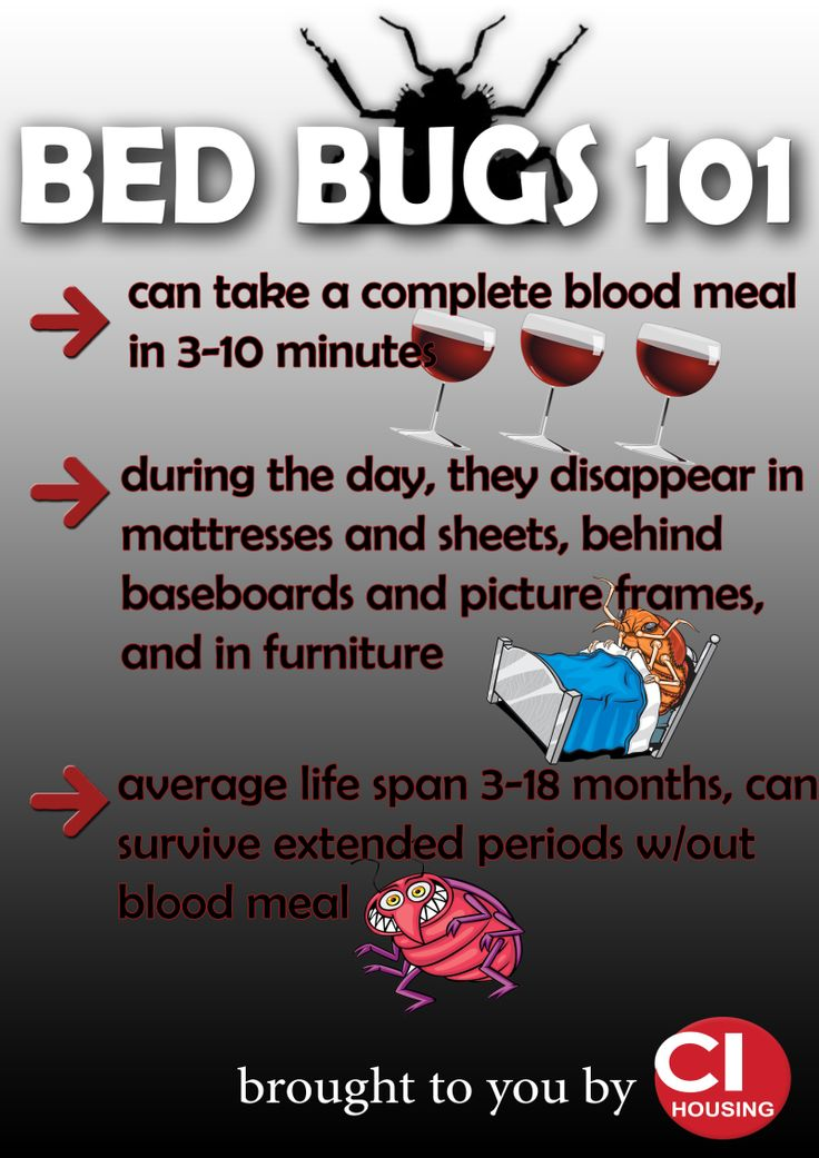 Bed Bugs 101 Infection Control Bed Bugs Bugs