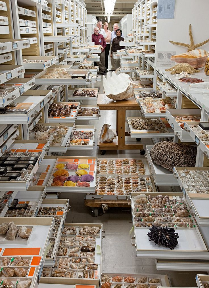 Collections from the Department of Invertebrate Zoology. Researchers present are Paul Greenhall, Robert Hershler, Ellen Strong, Jerry Harasewych, and Linda Cole