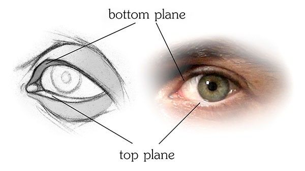 bottom and top planes of the eyelids