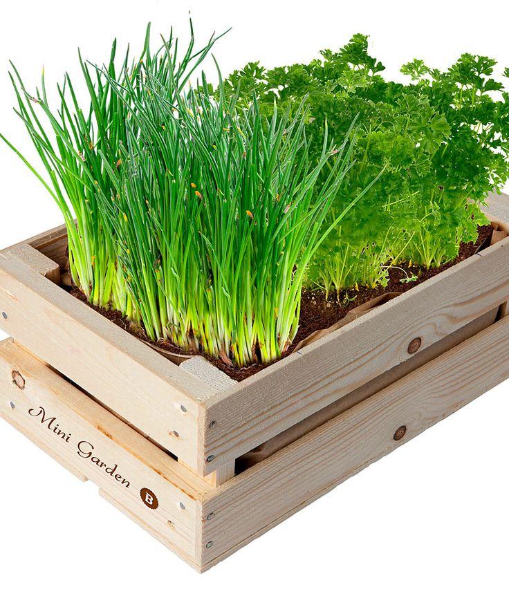 Kruidentuintje in houten krat | Zaden | Bakker Hillegom
