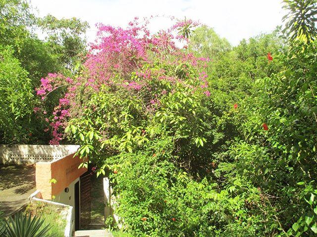 Brasilien Nahe Recife Pousada Mit Traumhafter Gartenanlage Zu Verkaufen Neuer Kaufpreis 399 000 Euro Https Ift Tt 2xoxxof Recife Gartenanlage Brasilien