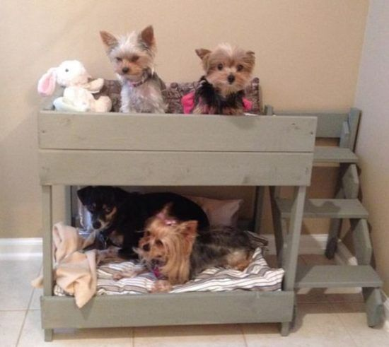 Best 25 Dog Bunk Beds Ideas On Pinterest Dog Rooms